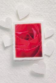 Vitt kort med hjärtan och röd ros
