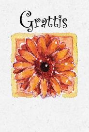 Gerbera ''Grattis''