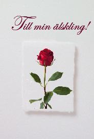 Vitt kort med en enkel röd ros ''Till min älskling''