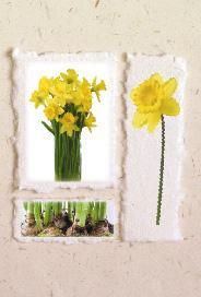 Ljust kort med gula påskliljor