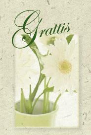 Ljus grönt kort med vita gerbera ''Grattis''