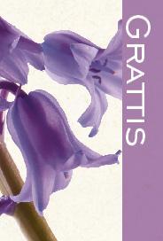 Ljust kort med blåklockor ''Grattis''