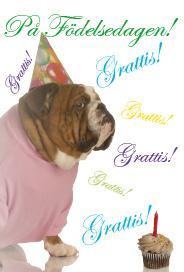 Bulldog Grattis