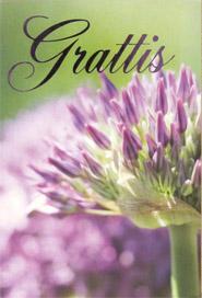 Närbild på lila blomma, text '' Grattis ''