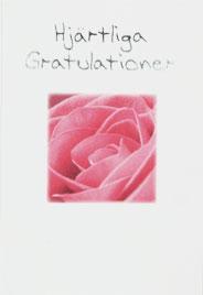 Närbild på rosa ros
