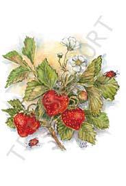 Jordgubbar tecknade