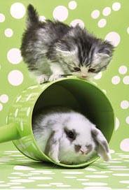 Katt+kanin utan text