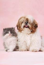 Katt+hund utan text