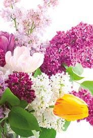 Blommor, utan text