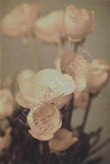 Minikort Blommor Antik