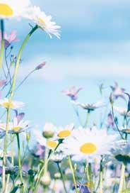 Minikort Sommarblommor blå himmel, Textfri