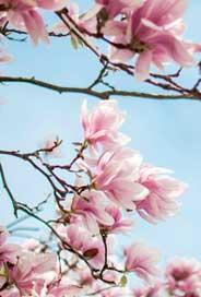 Minikort Blommande Träd, Textfri