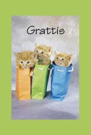 Grönt kort med tre katter i tre olika påsar