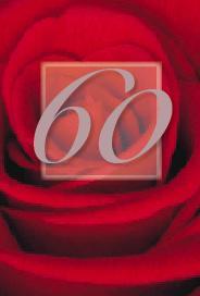 Röd ros 60år