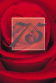 Röd ros 75år