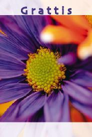 Lila blomma '' grattis ''
