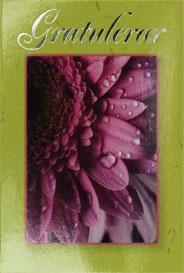 Närbild på fuktig blomma