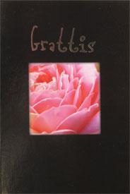 Närbild på rosa ros i ruta