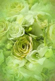 Gröna blommor,Textfri