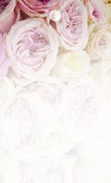 Rosa & gula rosar
