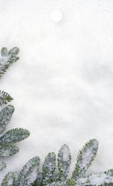 Snöiga grangrenar