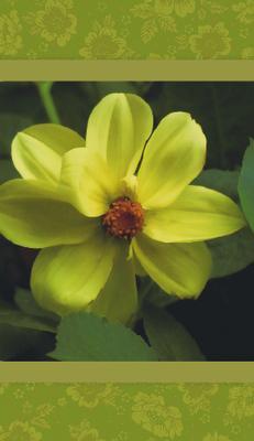 Grönt kort med gul/grön blomma.