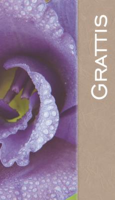Lila blomma ''Grattis''