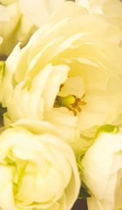 Ljusa blommor, textfri