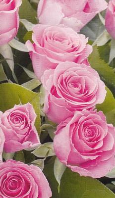 Fång rosa rosor
