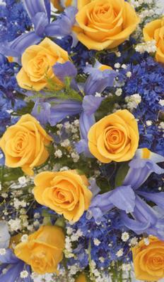 Blå & gul bukett, textfri