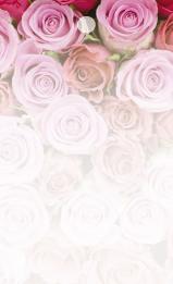 Rosa & röda rosor