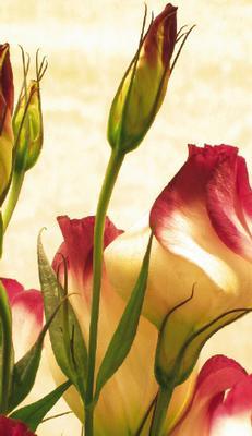 Ljust kort med vita/rosa blommor