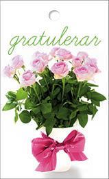 Mini mini Rosa rosor gratulerar