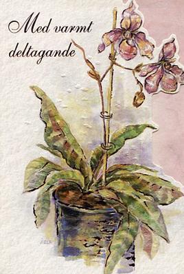 Ljus rosa orkidé i kruka.''Med varmt deltagande''