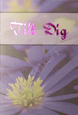 Makro blomma lila, Till Dig