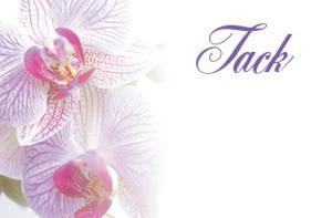 Lila orkidér '' Tack ''