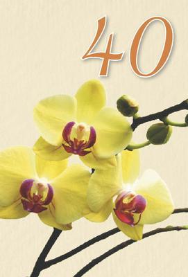 Gula orkidéer 40 år.