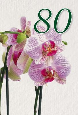 Rosa/lila orkideér 80 år.