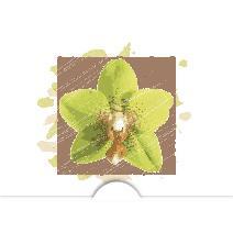Gul orkidé brun bakgrund