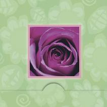 Fotograferad lila ros , grön bakgrund