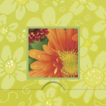 Orange gerbera, limegrön bakgrund
