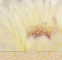 Närbild på gul blomma, textfri