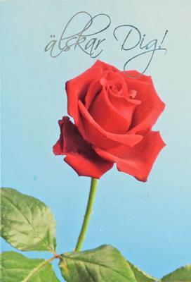 Röd Ros Älskar dig
