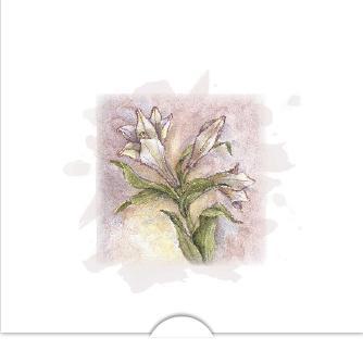 Vit amaryllis i akvarell
