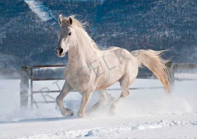 Häst i vinterlandskap
