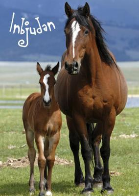 Hästar inbjudningskort