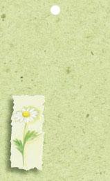 Grönt kort med vit blomma