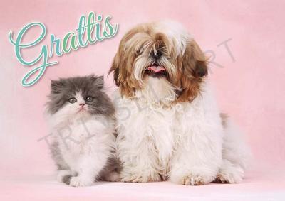 Hund o Katt Grattis