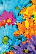 Färglada blommor, utan text
