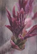 Minikort Vinröd blomma